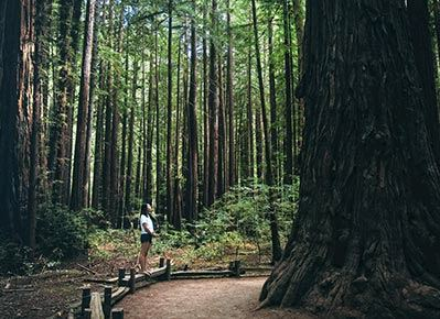 Armstrong Redwoods State National Reserve
