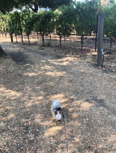 A day with your Dog in Sonoma County